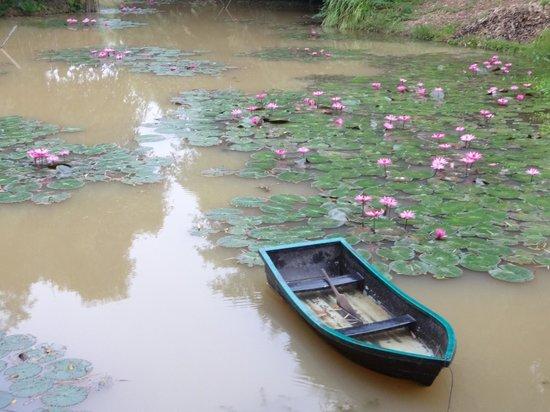 Rai Saeng Arun : Lotus pond