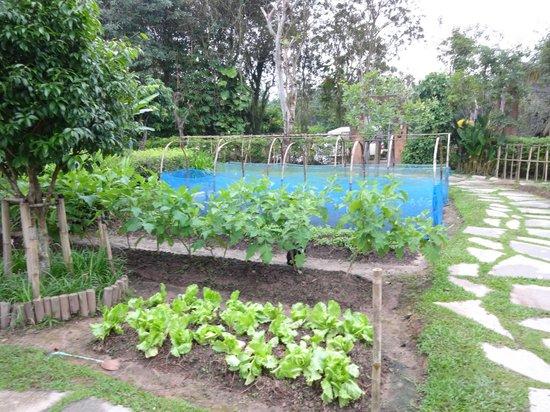Rai Saeng Arun : Organic garden area