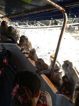 Kilim Karst Geoforest Park: Остановка с обезьянками monkey stop
