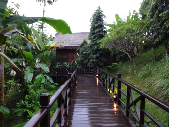 The Luang Say Lodge: Path to the rooms