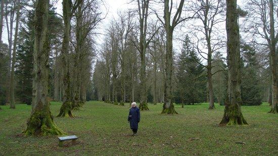 Westonbirt Arboretum : The Limes