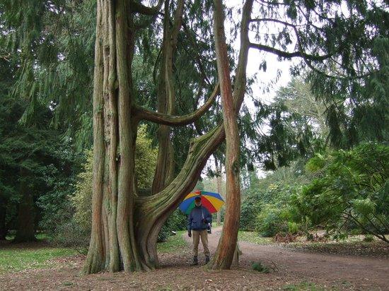 Westonbirt Arboretum : Interesting shapes