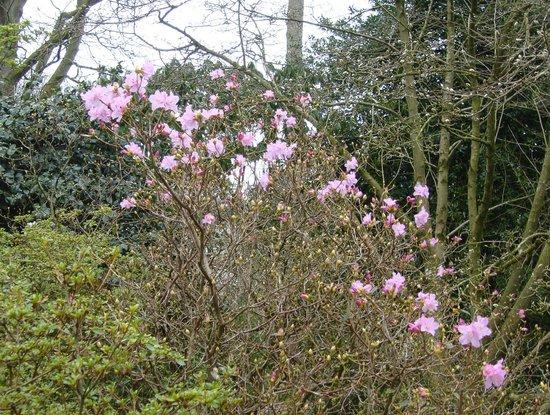 Westonbirt Arboretum : Early Spring colour
