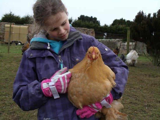 West Longridge Manor: Chicken heaven outside the cottages. Feb 2014