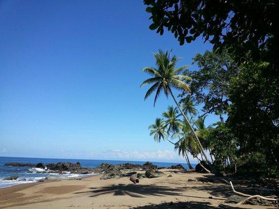 Finca Maresia: strand bij Drake Bay