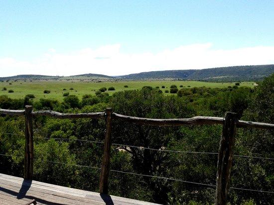HillsNek Safaris, Amakhala Game Reserve: Vue depuis la chambre et la terrasse