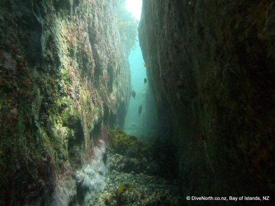 Dive North : The wonderful 'Tunnels'