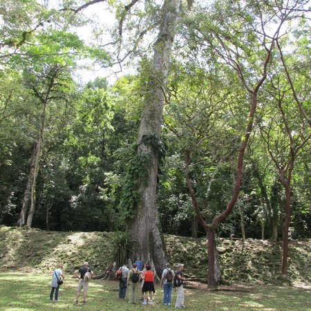 Yaxchilan: ancient trees