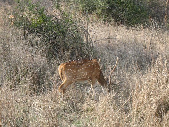 Amrit Resort: Sariska Tiger Reserve