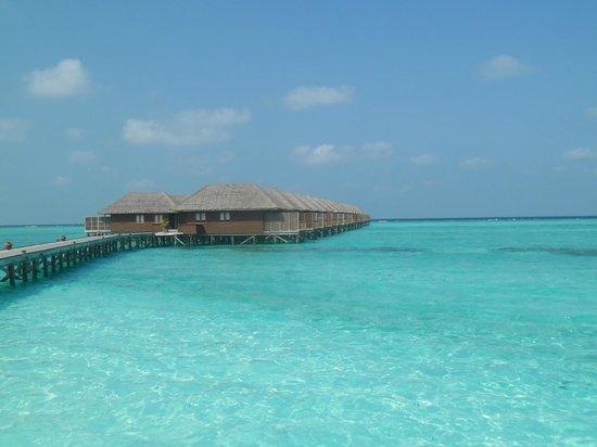 Meeru Island Resort & Spa: villas sur pilotis