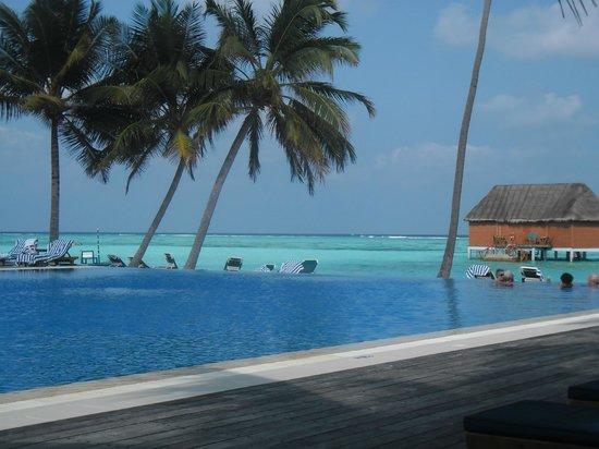 Meeru Island Resort & Spa: piscine adulte