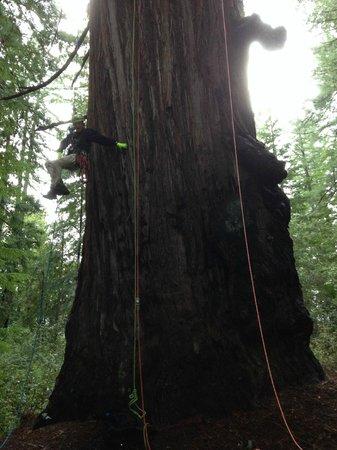 Redwoods River Resort & Campground: My 2 nephews