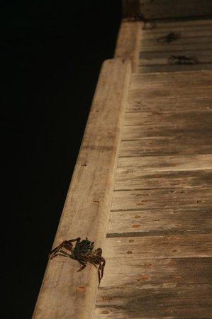 Fun Island Resort: крабики вечером на причале
