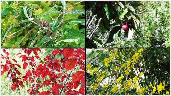 Colina del Manzano: Frutales y autóctonas al lado de la pile