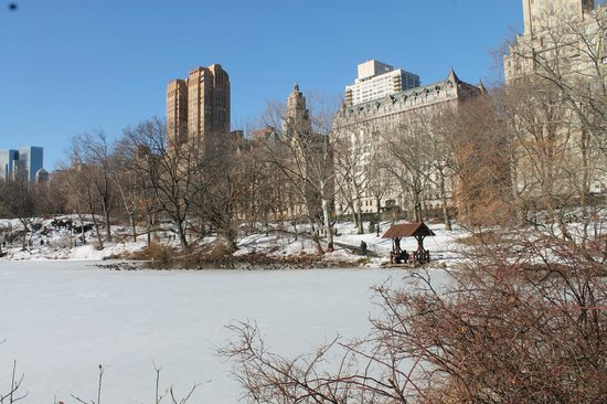 Central Park Sightseeing : panorama