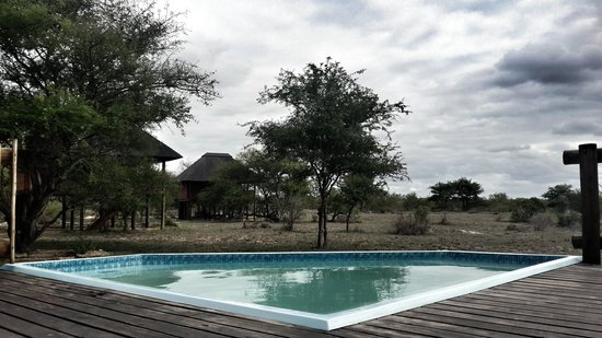 nThambo Tree Camp : The pool overlooking the tree houses - sometimes the ellies pop by for a drink of water :)