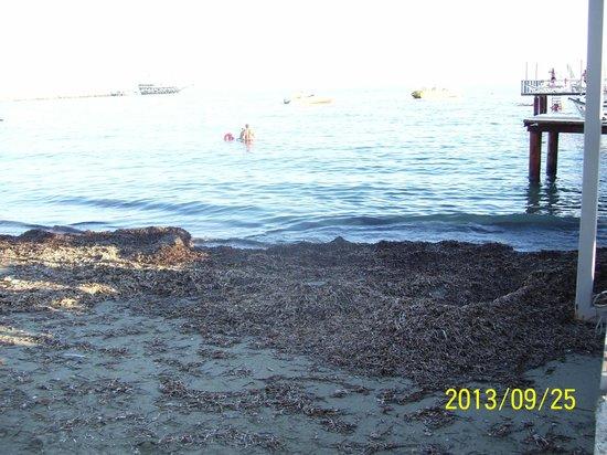 Jasmine Beach Resort: Beach after storm