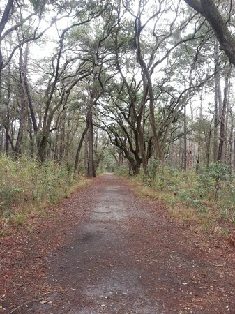 Skidaway Island State Park : Walking trails