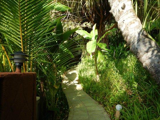 Ylang Ylang Beach Resort: Jungle pathways through grounds
