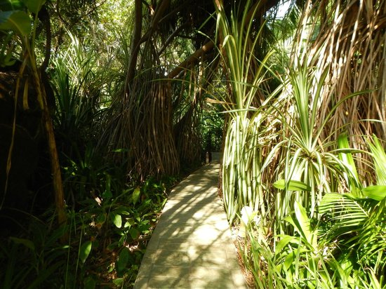 Ylang Ylang Beach Resort : Jungle pathways on grounds