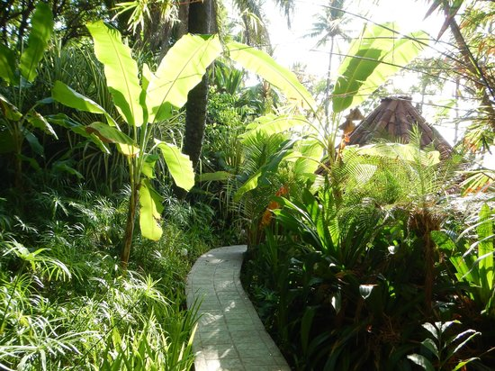 Ylang Ylang Beach Resort: Jungle pathways