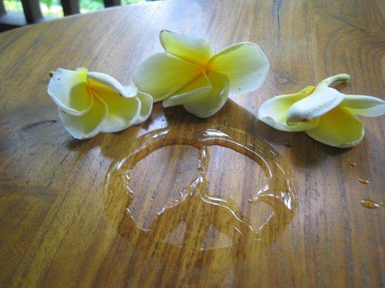 Jati 3 Bungalows: Les fleurs