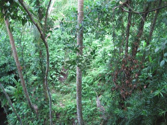 Jati 3 Bungalows: C'est beau le vert...