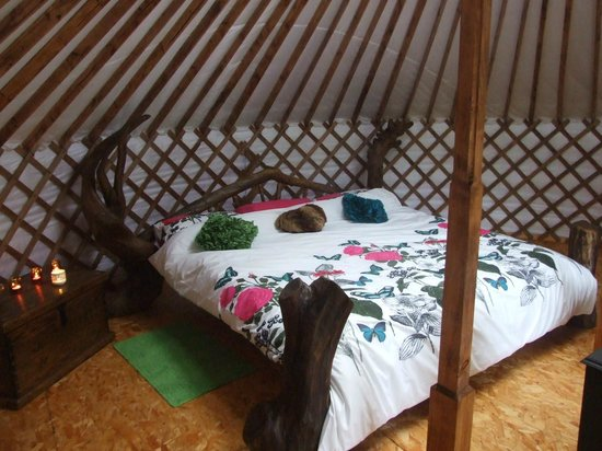 Ireland Glamping - Pink Apple Orchard : The Drift Wood Yurt