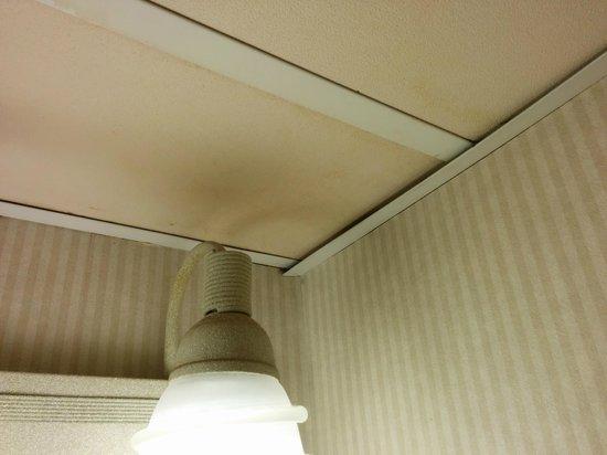Millennium Buffalo: Washroom ceiling