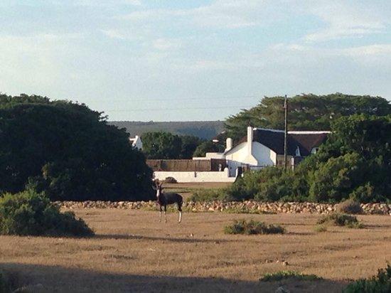 De Hoop Collection Nature Reserve: Headquarter