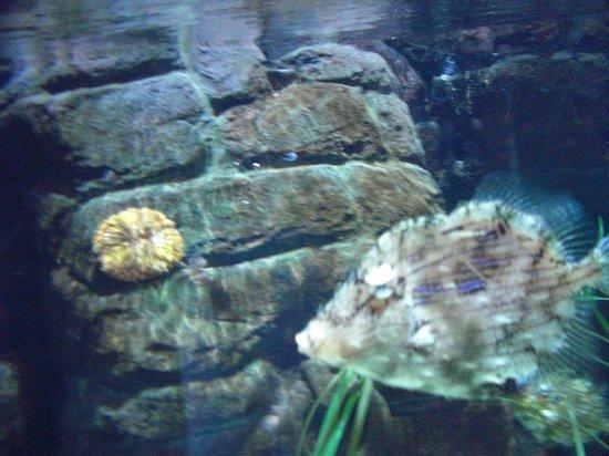 squalo - Picture of Gardaland SEA LIFE Aquarium, Castelnuovo del Garda ...
