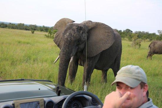Cheetah Plains : ELEPHANT