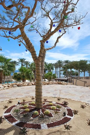 Grand Solmar Land's End Resort & Spa : Decorated tree on the grounds. Love the glass hearts from Cabo's glass factory!