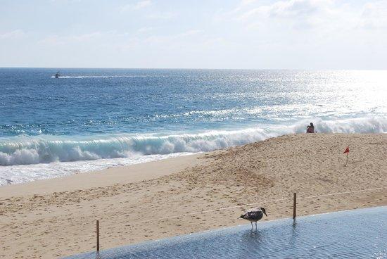 Grand Solmar Land's End Resort & Spa : Paradise