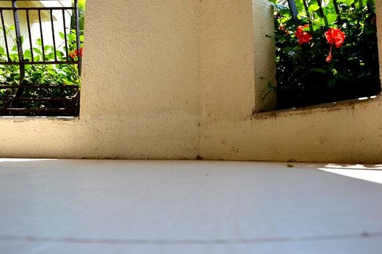 Royal Orchid Beach Resort & Spa, Goa: The wall near the floor had been freshend up, but thats all