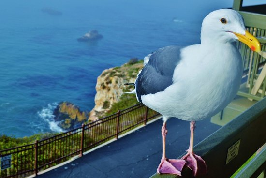 The Inn at the Cove: Early Morning Visitor to Our 2nd Floor Ocean Balcony with Beautiful Scenery!