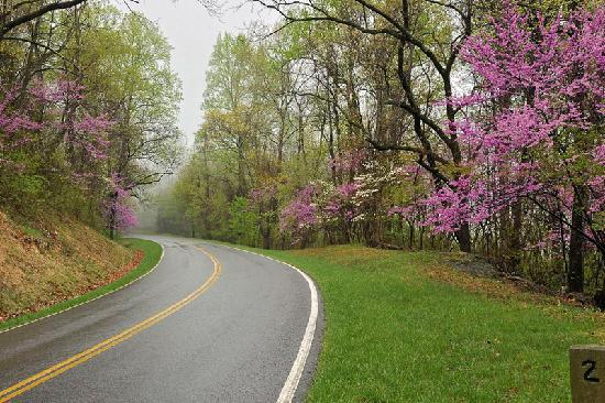Virginia: Skyline Drive in Shenandoah National Park