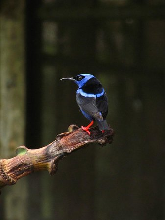 Chimuri Beach Retreat : One of many beautiful birds
