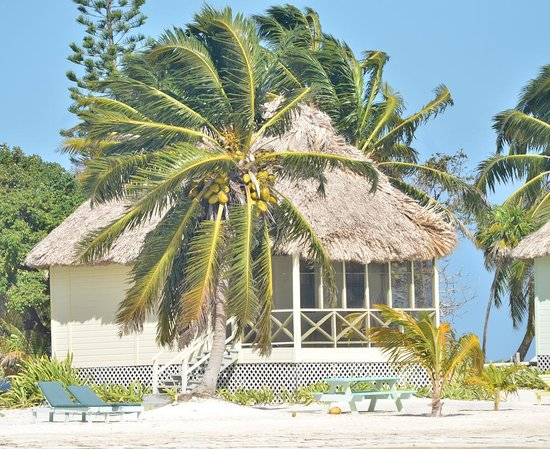 Blackbird Caye Resort : love