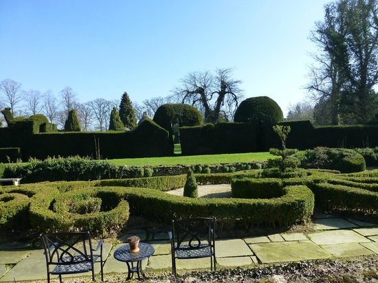The Manor: Manicured yew