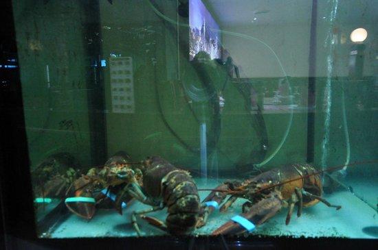 Ristorante Hong Kong: con acquari