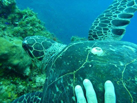 Jamaica Scuba Divers Ltd.: Turtle-Runway Bay, Jamaica