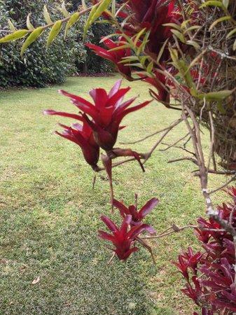 Ambience Inn: jardin