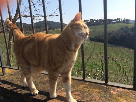 Azienda Agraria Le Crete Agriturismo: incontri