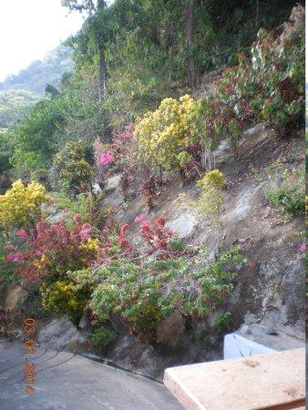 Lookout Inn Lodge: Colorful hillside