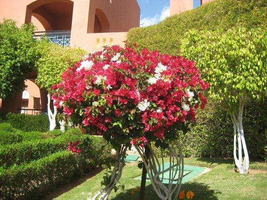 TUI Magic Life Sharm el Sheikh: Colourful plants