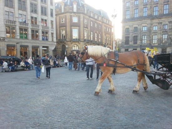 Dam Platz: dam meydanında at arabasıyla gezinti yapabilrsiniz