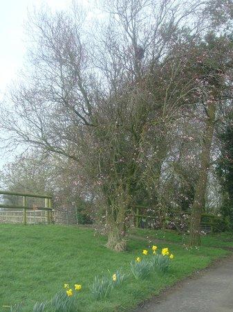 Bells Farm Western Rides: Early Spring flowers