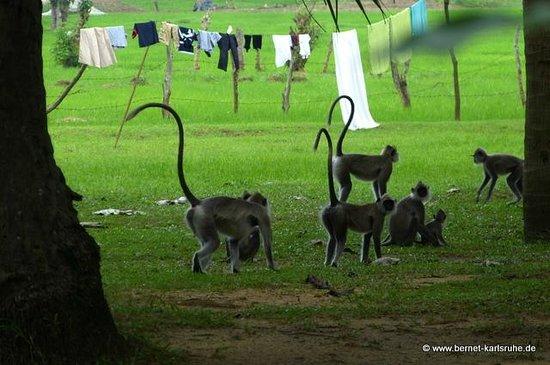 Paradise Inn: Das Reisfeld gehört auch noch zum Grundstück