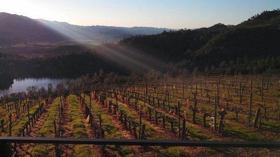 Red Wine Roads : Viader